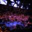 id:aau_square