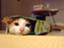 id:aikumi