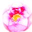 id:akatsukii