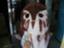 id:akira-tago0704