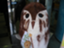 akira-tago0704