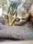 id:akkokko-ehon