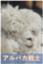 alpaca-san
