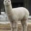 alpaca2unix