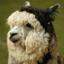 id:alpaca_network