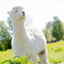 alpaca_pacapaca