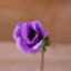 anemone-kaori