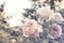 id:anemone1219