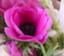id:anemone92