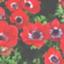 anemone_s