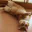 id:aoi-kotorii52
