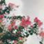 id:aoiomatsu