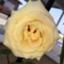 id:aozora0226