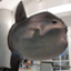 id:aquariumnews