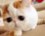 id:ariel-acchan0114
