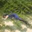 id:ariyoshi0531