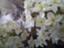 id:aromafloat