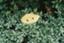 id:awakomeda