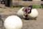 id:ayaka_potsunen