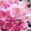 id:ayumi88