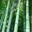bamboo80286