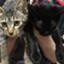 bcatcat2