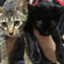 id:bcatcat2