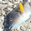 id:berao-setouchi-fishing