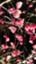 id:berrysocute