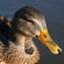 id:birdheads