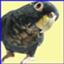 id:birdistbee