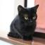 id:blackcatty
