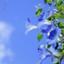 id:blauewinde
