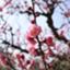 id:blue_mokusei