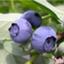blueberry623