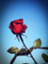 id:bluemoonm