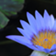 bluewaterlily9
