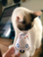 id:blurrycats