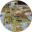 id:boardgamecircle