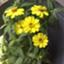 id:botanical-kamakura
