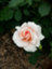id:buki___j