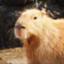 id:bun_kapibara