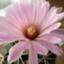 id:cactuspower