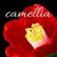camellia1977