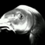 id:carpio-carpio