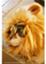 cat222ys