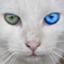 id:cat2525jp
