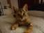 id:cat93bottch83