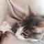 cat_et_moi