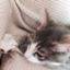 id:cat_et_moi